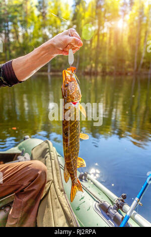Fishing camping tourism relax trip active lifestyle adventure concept. Fisherman hand with fish pike against background of beautiful nature and lake or river - Stock Photo