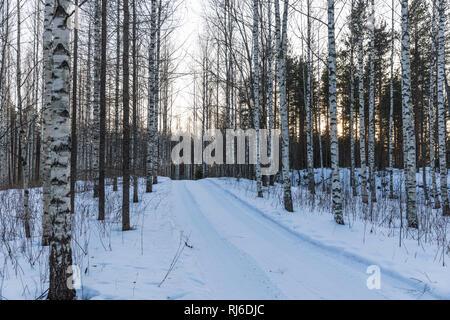 Finnland, Straße im Wald mit Birken im Winter - Stock Photo
