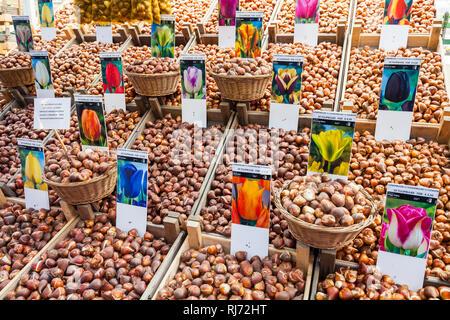 Niederlande, Amsterdam, Innenstadt, Blumenmarkt an der Singel, Markt, Drijvende bloemenmarkt, Bloemenmarkt, Blumen, Blumenzwiebeln - Stock Photo
