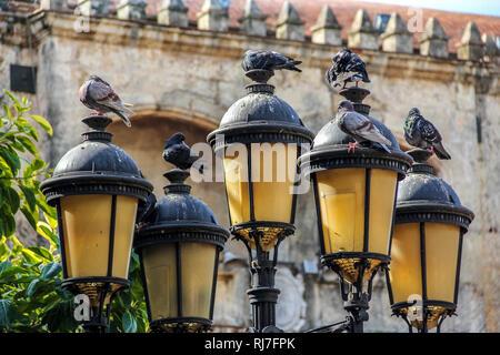 Große Antillen, Karibik, Dominikanische Republik, Santo Domingo, Altstadt, Tauben auf Lampen vor historischem Gebäude - Stock Photo