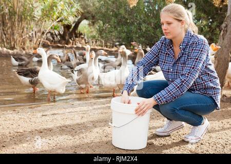 Young female farmer working on bird farm, feeding domestic fowl - Stock Photo