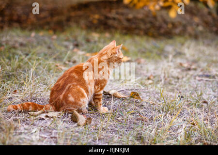 red cat sitting on the street in the grass - Stock Photo