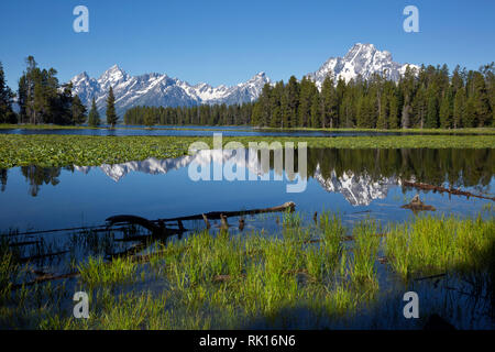 WY03351-00...WYOMING - Mount Moran reflecting in Heron Pond, located on the edge of Jackson Lake, in Grand Teton National Park. - Stock Photo