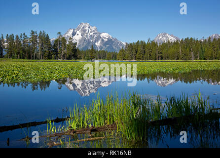 WY03353-00...WYOMING - Mount Moran reflecting in Heron Pond, located on the edge of Jackson Lake, in Grand Teton National Park. - Stock Photo