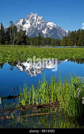 WY03354-00...WYOMING - Mount Moran reflecting in Heron Pond, located on the edge of Jackson Lake, in Grand Teton National Park. - Stock Photo