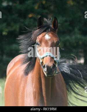 Horse Farm fun - Stock Photo