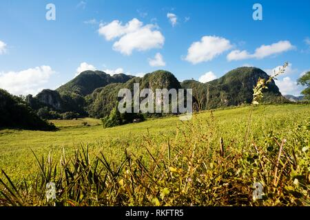 Panorama of the Vinales Valley with the Mogotes. - Stock Photo