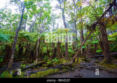 Rainforest scenic near the Thurston Lava Tube in Hawaii Volcanoes National Park. - Stock Photo