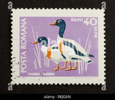 ROMANIA - CIRCA 1980: Stamp printed in Romania shows a pair of shelducks, circa 1980. - Stock Photo