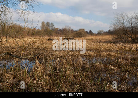Fen meadows Winnall Moors Nature Reserve Hampshire and Isle of Wight Wildlife Trust Reserve Winchester Hampshire England UK March 2016 - Stock Photo