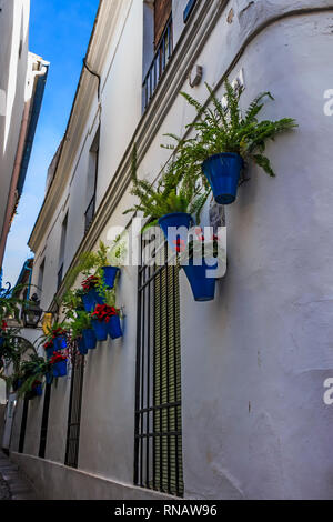 White walls and blue flower pots at Calleja de las Flores (The Street of Flowers) - Stock Photo