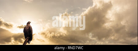 The eagle on the sunset - Stock Photo