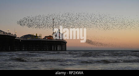 Brighton, UK. 20th Feb, 2019. Visitors and birdwatchers enjoy a spectacular starling murmuration over Brighton Palace Pier this evening at sunset as sunny weather is forecast to continue in the south over the next few days Credit: Simon Dack/Alamy Live News - Stock Photo