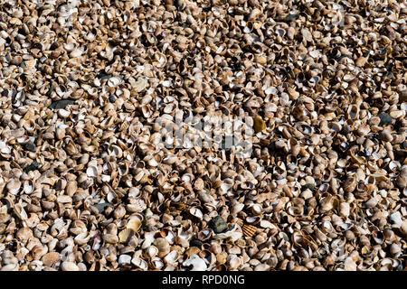 walking on shells - Stock Photo