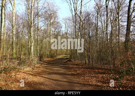 Waldweg im Wittringer Forst in Gladbeck - Stock Photo