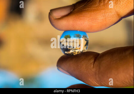 cow reflection in hydro gel ball. - Stock Photo