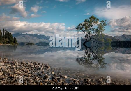 Famous lone tree reflected in lake Wanaka, New Zealand. - Stock Photo