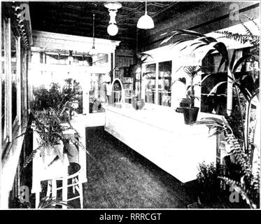 . Florists' review [microform]. Floriculture. New Store of A. Steffefer, on tlie Southwest Side of Chicago.. Please note that these images are extracted from scanned page images that may have been digitally enhanced for readability - coloration and appearance of these illustrations may not perfectly resemble the original work.. Chicago : Florists' Pub. Co - Stock Photo