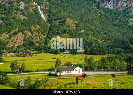 Horse on grass pasture on mountain landscape in Flam, Norway. Horse on green meadow sunny day. Summer landscape with pasturing. Domestic animal on nature. Ecology. Agriculture and farming. - Stock Photo