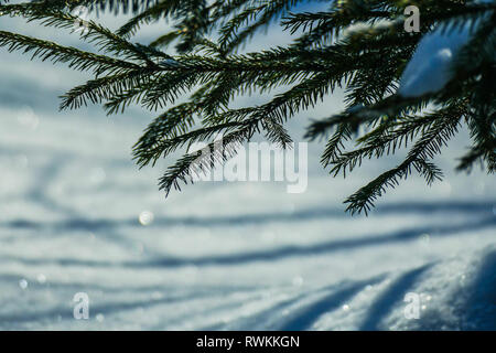 March snow glitters - Stock Photo
