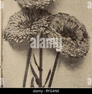 Dreer's wholesale price list : bulbs for florists plants for florists flower seeds for florists florists' requisites  dreerswholesalep1919henr Year: 1919 - Stock Photo