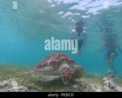 People on vacations wearing snokeling masks swimming with sea turtle in turquoise blue water of Gili islands, Indonesia. Underwater photo. - Stock Photo