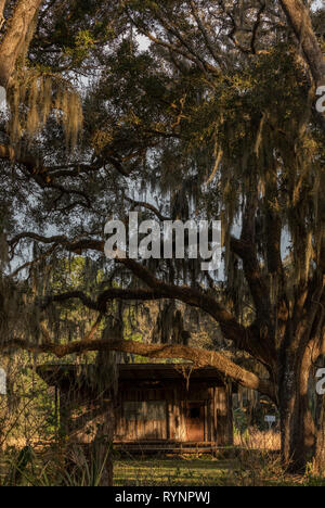 Rural Florida; old cabin in the woods surrounded by Spanish Moss. Crystal River Preserve State Park, Florida - Stock Photo
