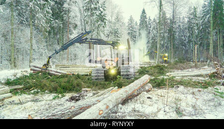 Logs scattered on the ground on the forest with the log grappler truck gettings logs - Stock Photo