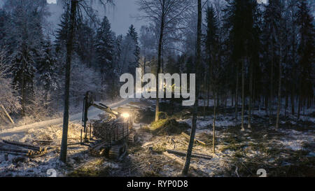 The view of the log harvester on the side of the forest cutting out the logs at night - Stock Photo