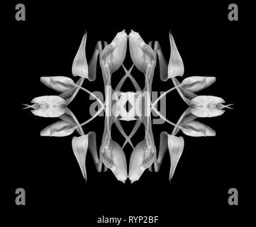 Fine art floral decorative symmetrical monochrome pattern/decor/ornament/mandala made from macros of tulips on black background in vintage painting - Stock Photo
