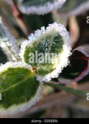 Frost on tiny leaves, macro - Stock Photo