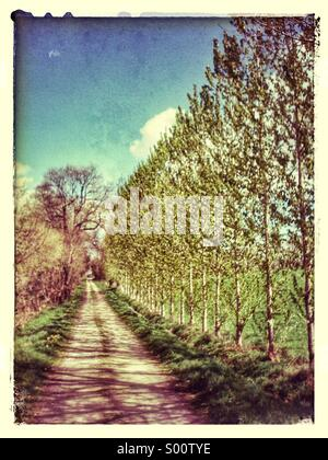 Country lane in spring, France, Europe - Stock Photo