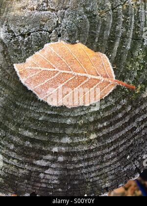 A leaf covered by frost sits on top of a tree trunk - Stock Photo