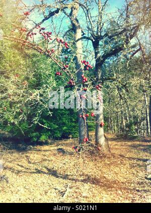 Branch in woods with red berries - Stock Photo