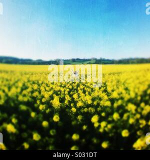 Happy Girl In A Rapeseed Field - Stock Photo