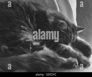 Dreamy picture of a sleeping cat - Stock Photo