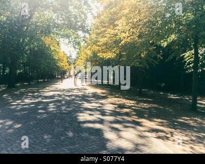 Cyclists riding through Tiergarten, Berlin, in summer, towards Brandenburg Gate - Stock Photo