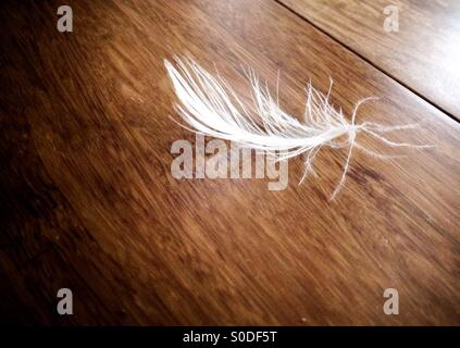 White feather on floor - Stock Photo