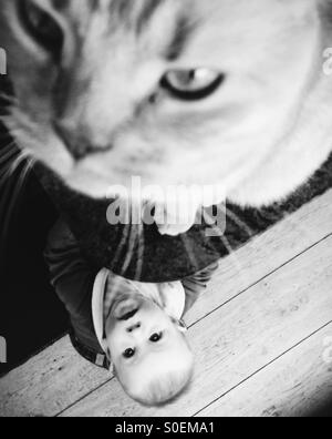 Baby boy looks up at cat sitting on kitchen counter - Stock Photo