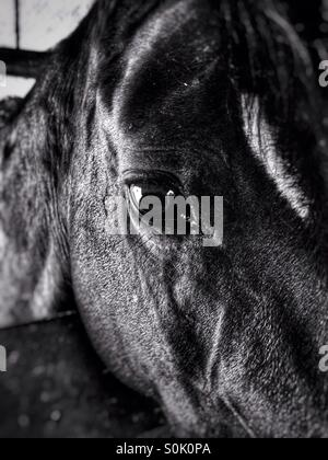 Horse face close-up and soulful eye. - Stock Photo