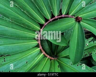 Exotic plant with big leaves - Stock Photo