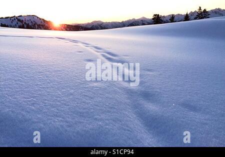 Sunsetting, Garibaldi Lake Provincial Park, BC - Stock Photo
