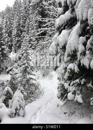 Forest in snow, French alps, La Plagne, Savoie, snow, trees, winter, - Stock Photo