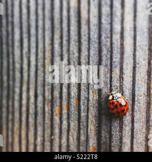 Ladybug on wooden wall - Stock Photo