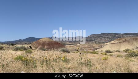 Desert flowers, Painted Hills, John Day National Monument, Oregon - Stock Photo