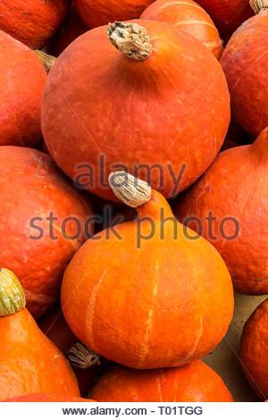 Red kuri squash, Cucurbita maxima, onion squash in the Hubbard squash group. - Stock Photo