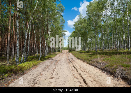 Ploughed-up dirt road in forest serving as an emergency route for authority services in case of fire. Poland. Europe. - Stock Photo