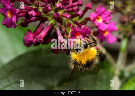 Bee taking a drink - Stock Photo