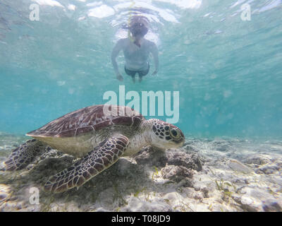 Woman on vacations wearing snokeling mask swimming with sea turtle in turquoise blue water of Gili islands, Indonesia. Underwater photo. - Stock Photo