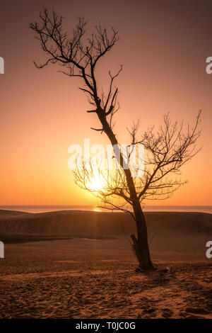 A lone tree at sunset at the famous Tottori Sand Dunes in western Japan - Stock Photo
